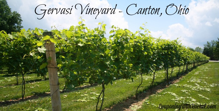 Gervasi Vineyard review 2