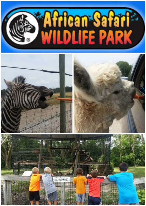 african safari wildlife park review sandusky ohio